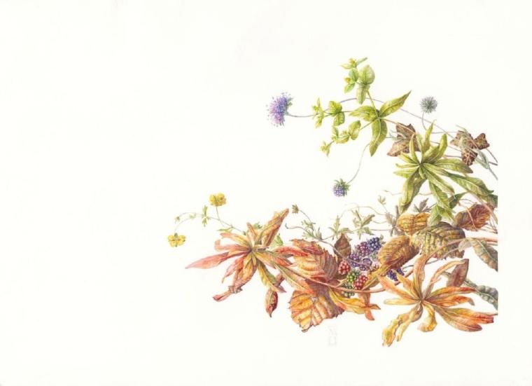 Plants From An Irish Hedgerow.        Mary Dillon