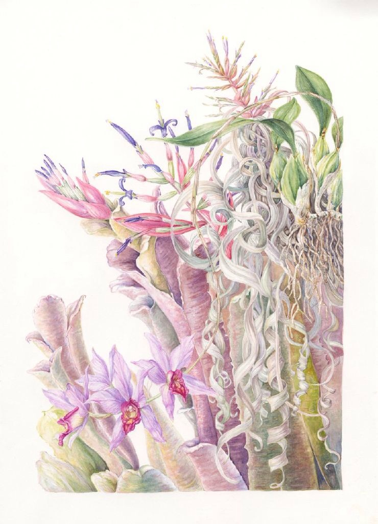 Epiphytic plants, Central America. Mary Dillon
