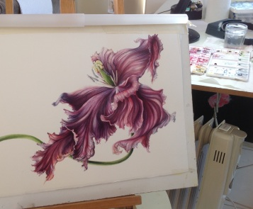 Tulipa 'Black Parrot' WIP,Mary Dillon